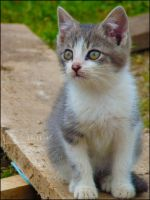 Meme si. by MelcieLerua
