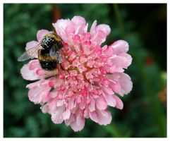 Honey To The Bee by ClaireM