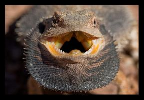 Bearded Dragon by Eman333