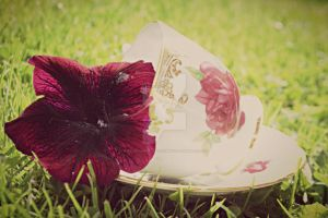 Vintage by KayleighBPhotography