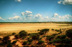 Kalahari Plains by DanCrystalis