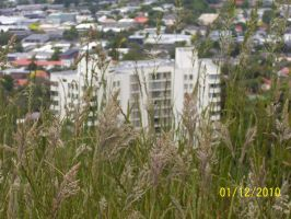 Reeds and Auckland by Solacen