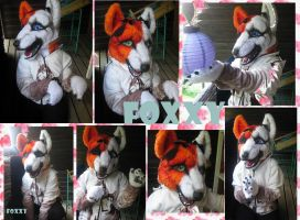 .:New Fursuit Foxxy:. by sushisusi