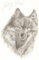 Grey Wind by Noble--6