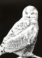 Owl ScratchBoard by bliss-chan