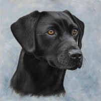 Black Labrador Portrait. Oil on Panel. by painterman33