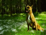 Dogs day out. - Not Stock by Chunga-Stock