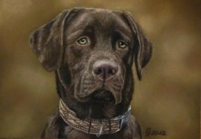 brown labrador by AnimalsART