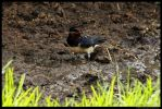 Nesting Collection by In-the-picture