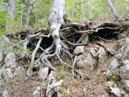 Roots 3 by Ivette-Stock
