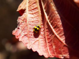 Yellow Lady Bug by Love-Art-Type