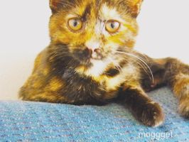 Teddy the cat by MOGGGET