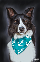 Suspense the Border Collie by Angiegsnz