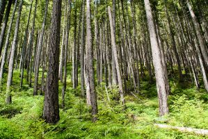 Elwha River Valley by elpez7