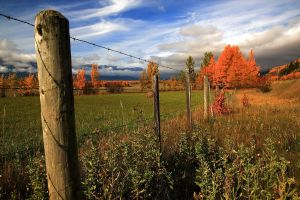 Fence and Fields by Frame-by-Frame