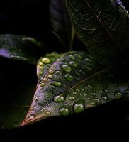 a drop of water by awjay