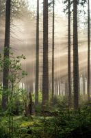 forest rays by artmobe