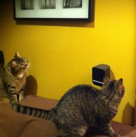 My cats, Eddie and Kitten causing mischief :) by JosieKITTEH