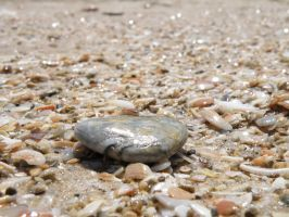 Stone among the shells by GorALexeY