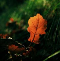 Autumn veins by Wellferine