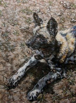Wild dog portrait by Katie-Z