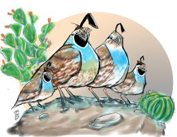quirky quails by colepetersonart