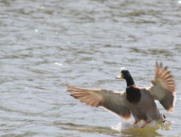 Comin' In For A Landing by Rjet33