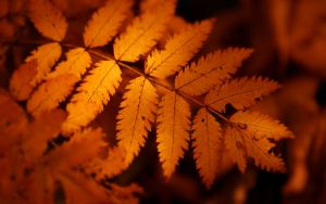 autumn leaf by fluentwater