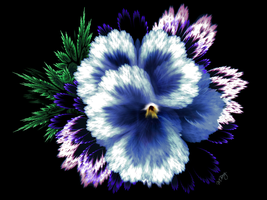 Blue Pansy by myberg2
