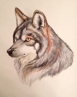 A Portrait of Canis lupus by XXD17