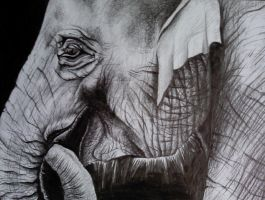 Elephants always smile by Aimski