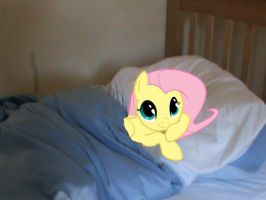 fluttershy in my bed, daw by jetrixwolf
