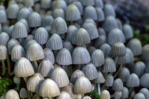 mushrooms6 by hubert61