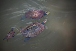 Happy Turtle Family by Quit007