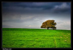 The Tree by amassaf