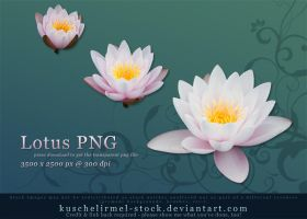 Lotus PNG by kuschelirmel-stock