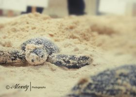 tortugas by ItaDreams