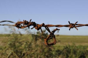 barb wire three by density-stock