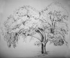 Fynbos Estate Tree by hippiedesigner