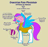 My Littler Ponatomy by Inkwell-Pony