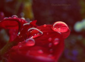 After the Rain by louiecablouie