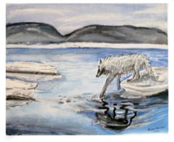 Artic Wolf by R0mainR