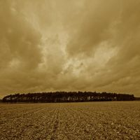 native soil by augenweide