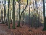 STOCK Forest by Inilein