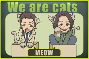 Kitten Sam and Cas by kim777777