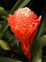 Tropical Red Delight by JanuaryGuest