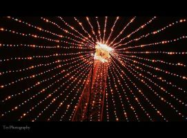 The Zilker Tree by tesphotography