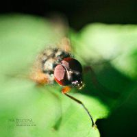 Bubbles by Insect-Lovers-Club