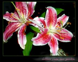 lillies by coolingj7j77