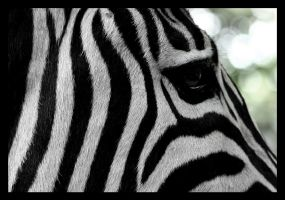 ZeBrA CroSsInG 2 by genr